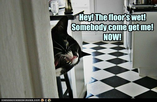 Hey! The floor's wet! Somebody come get me! NOW!