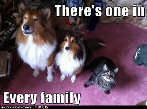There's one in  Every family