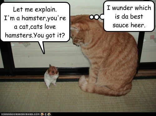 interspecies captions eat friend hamster food Cats sauce - 6940062464