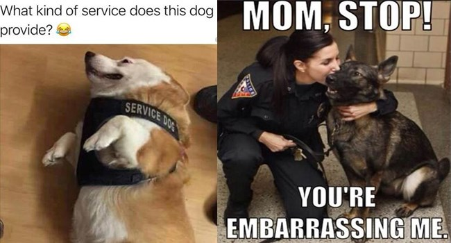 memes with dogs that could have been service dogs