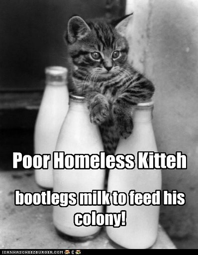 Poor Homeless Kitteh bootlegs milk to feed his colony!