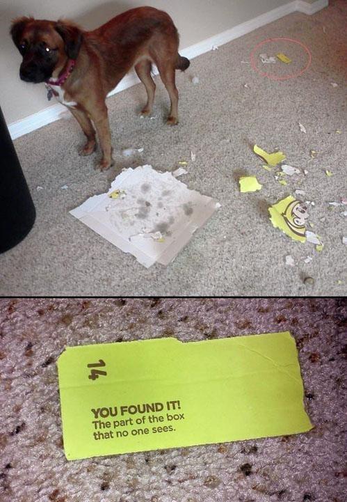 secret found box dogs - 6940418048