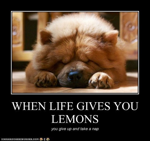 dogs,lemonade,nap,chow chow,lemons,demotivational poster
