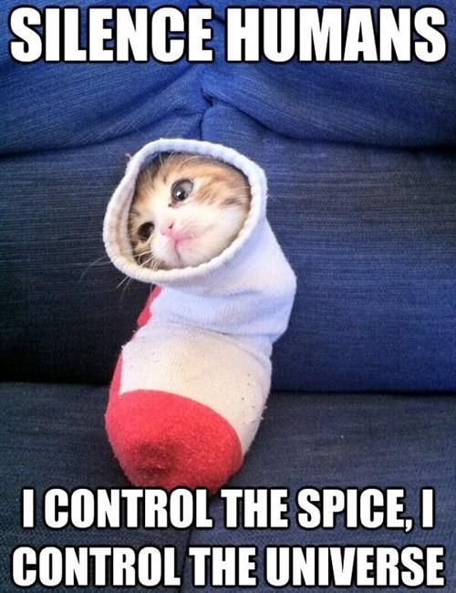 kitten Dune socks universe movies captions Cats sock kittten - 6940543744