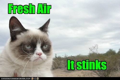 tardar sauce captions Grumpy Cat fresh air Cats air