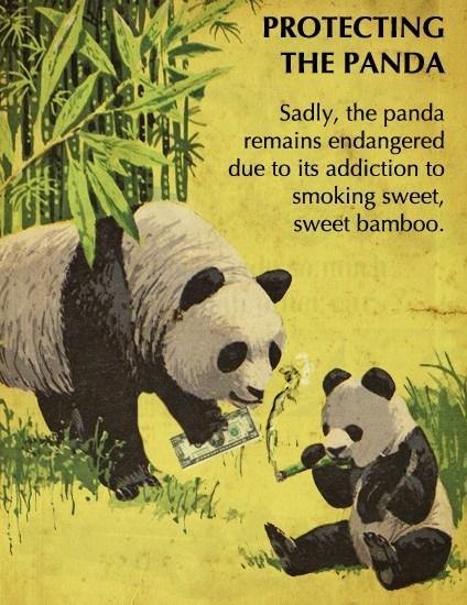 bamboo panda drugs endangered - 6940600832