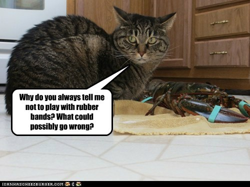 rubber bands,lobster,toy,captions,play,Cats
