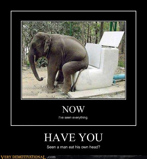 have you,man,elephant,head,toilet