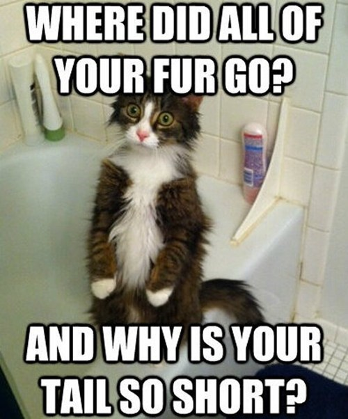 lolcats fur nekkid captions humans nude confused p33n showers Cats