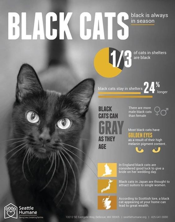 black cats infographics Cats stats black - 6940933