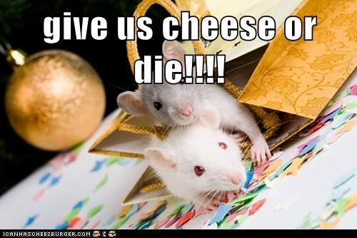Cheezburger Image 6941034496