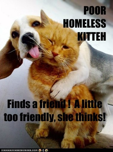 POOR HOMELESS KITTEH Finds a friend ! A little too friendly, she thinks!