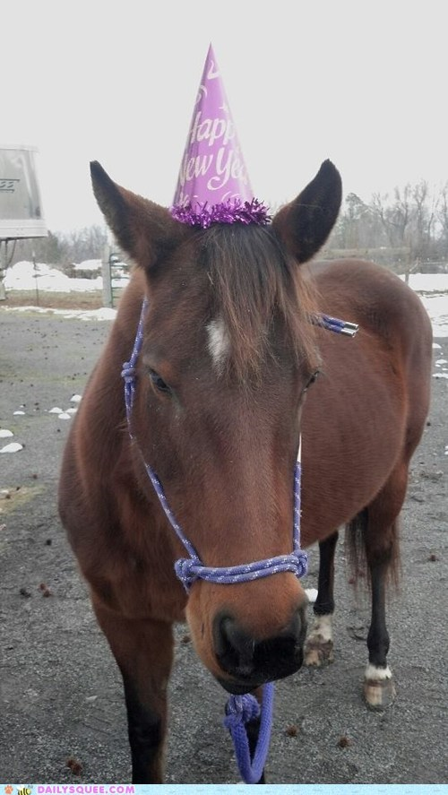 reader squee,pets,squee,hat,horse,rescue