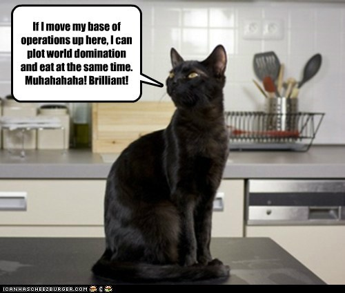 Basement Cat Can Has Upgrade