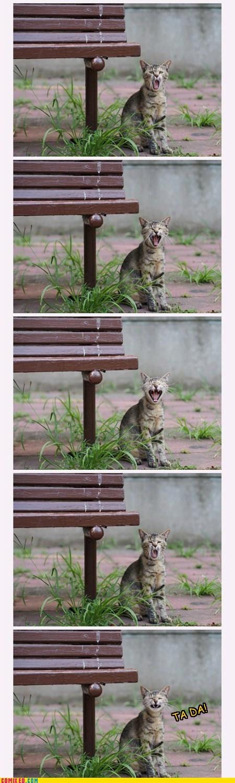 yawn cat cute ta da - 6942604032