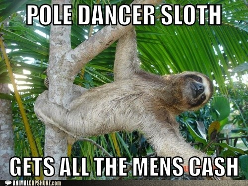 fun men cash pole dancers climbing hanging sloths tree