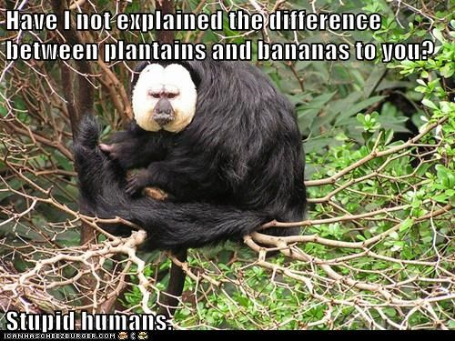 face monkeys plantains frustrated bananas humans stupid