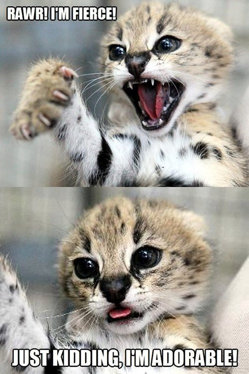 scary fierce adorable just kidding captions cubs cheetahs big cats multipanel - 6943446272