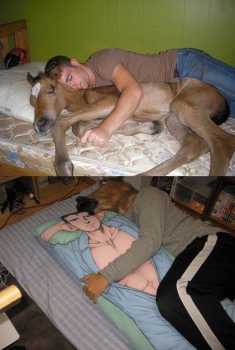 bed,mask,switcharoo,horse
