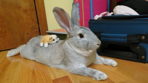 plush toy Bunday puppy pet rabbit bunny squee - 6943900416
