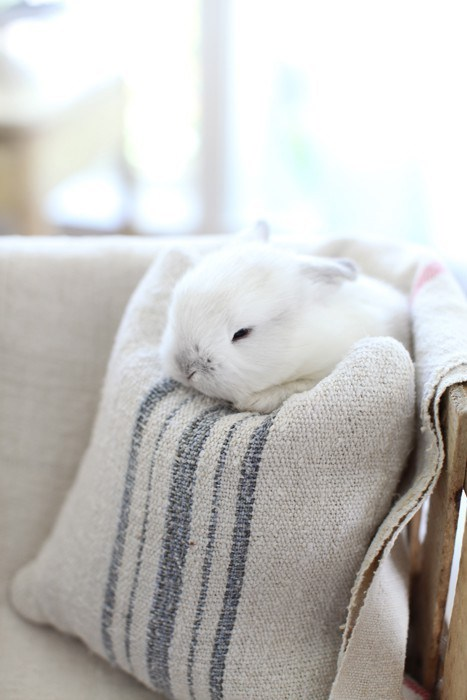 Bunday marshmallow tiny rabbit bunny squee