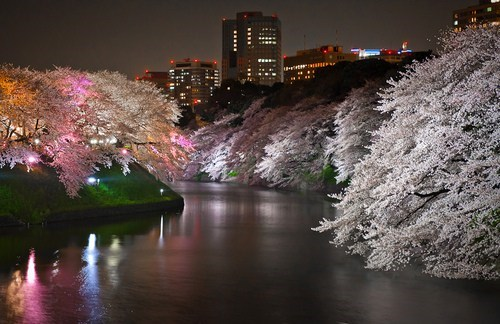 river cityscape Japan cherry blossoms
