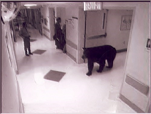 hospital bear animals fail nation g rated