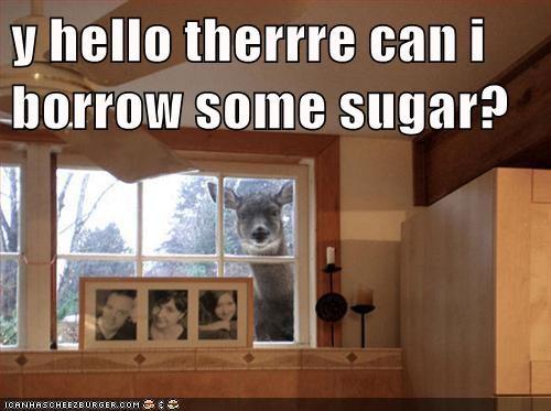 y hello therrre can i borrow some sugar?