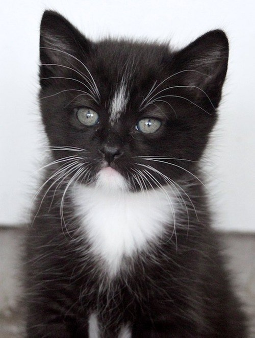 cyoot kitteh of teh day,frowns,kitten,frowning,grumpy,Cats