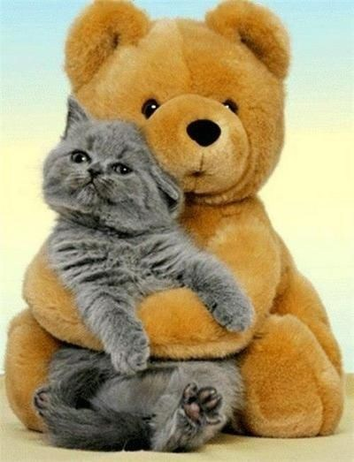 cyoot kitteh of teh day kitten stuffed animals hugging teddy bears hugs Cats - 6944115968