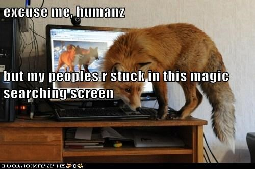 foxes,excuse me,stuck,trapped,help,computer,confused