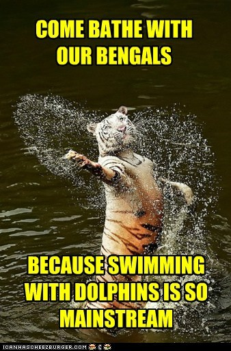 tigers water swimming mainstream bengals dangerous bathing - 6944317184