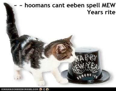 ~ ~ hoomans cant eeben spell MEW Years rite