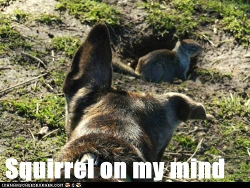 Squirrel on my mind