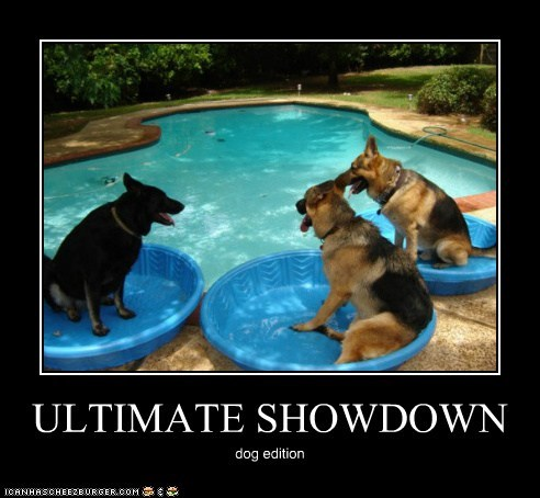 ULTIMATE SHOWDOWN dog edition