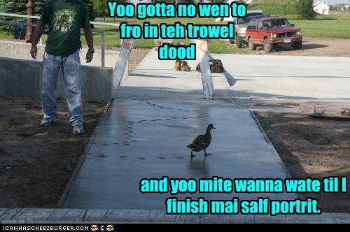 wait,ducks,walking,cement,self portrait
