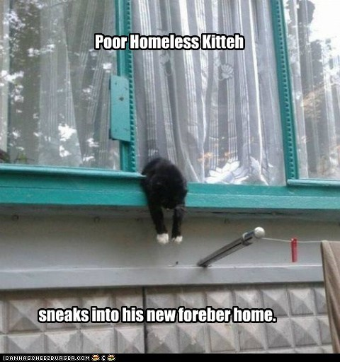 Poor Homeless Kitteh sneaks into his new foreber home.