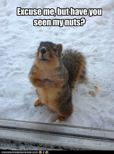 excuse me,hungry,snow,cold,squirrel,nuts,no