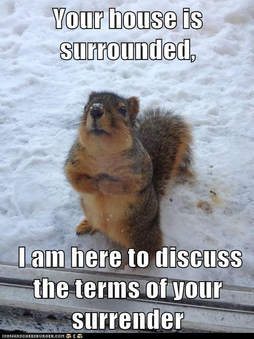 surrender,terms,house,threats,surrounded,waiting,message,squirrels