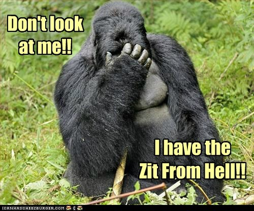 covering dont-look hell embarrassed gorillas zits - 6946239744