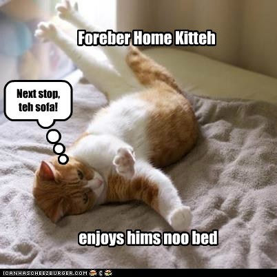 Foreber Home Kitteh enjoys hims noo bed Next stop, teh sofa!
