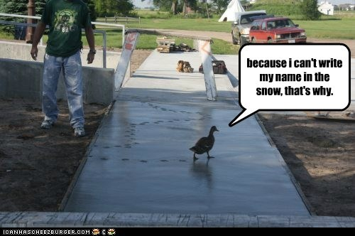 writing your name in the snow,snow,ducks,cement,why