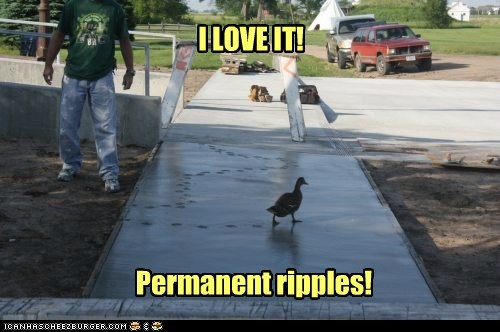 ducks,cement,love it,ripples,permanent