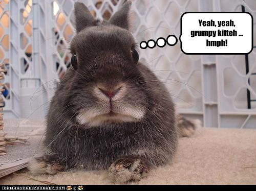 bunnies jealous grumpy Grumpy Cat hmph