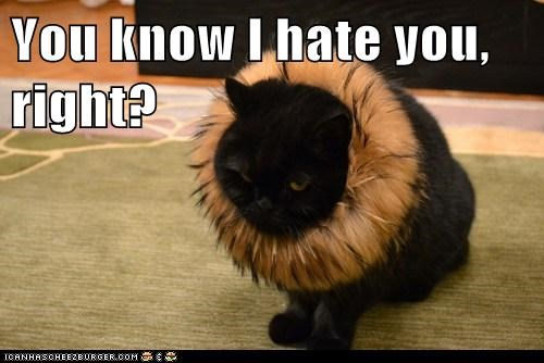 You know I hate you, right?