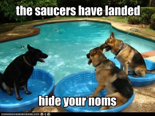 Aliens dogs german shepherd flying saucer pool noms invasion - 6947068672