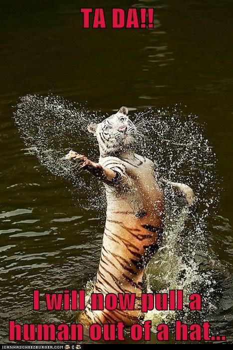 dancing,tigers,water,tada,human,trick,magic