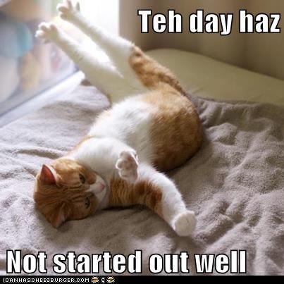 cat morning funny - 6947210240