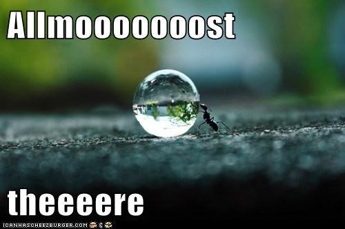 water pushing ants - 6947491584