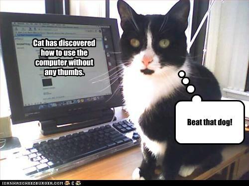 Cat on Computer.